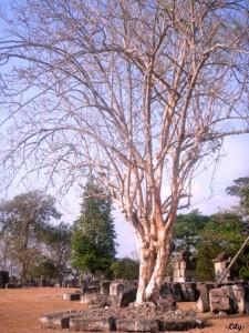 Mengagumi Keindahan Candi Istana Ratu Boko Yogyakarta yang penuh misteri