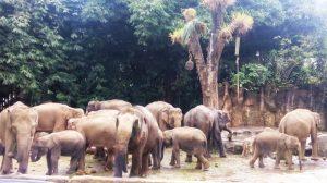 Serunya Berlibur Dan Belajar Di Taman Safari Indonesia Cisarua Bogor