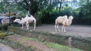Taman Safari Indonesia Cisarua Bogor