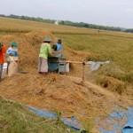 Sejenak Melihat Bagaimana Proses Para Petani Menanam Padi di Sawah