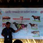 Cimory Mountain View Tempat Belajar Ternak Yang Menarik Untuk Anak