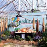 Belajar Menanam Sayuran Hidroponik di Jendela Alam Lembang Bandung