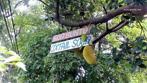 Makan Sop Buntut Enak di Resto Dahapati Kota Bandung
