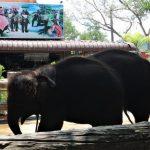Naik Gajah di Chang Puak Camp Hat Yai Thailand Selatan